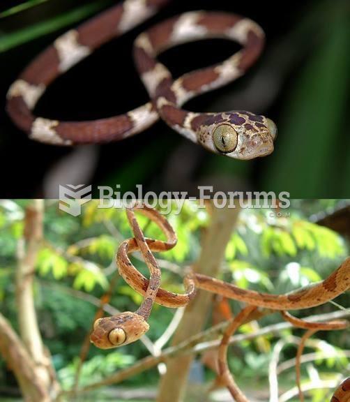 Blunt headed tree snakes