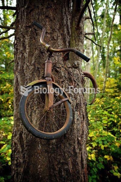 Bike in Tree