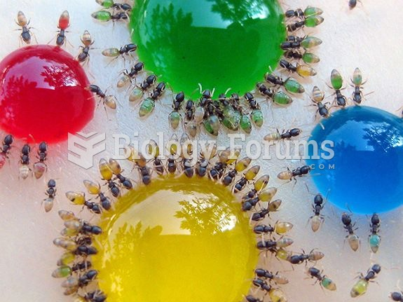 Ants eating candy
