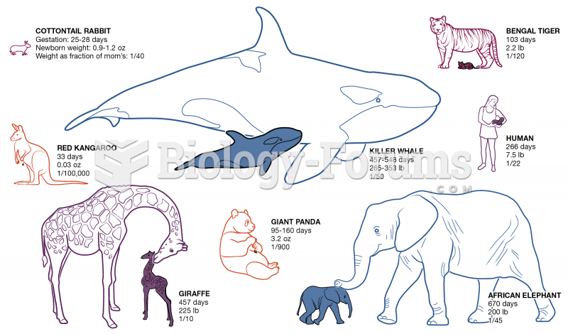 Animals and their offspring