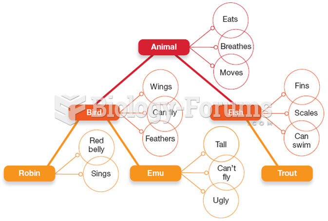 """A Semantic Network Diagram for the Category """"Animal"""""""