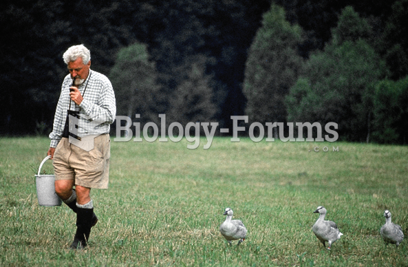 Konrad Lorenz is shown with his baby geese.