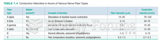 Conduction Velocities in Axons of Various Nerve Fiber Types