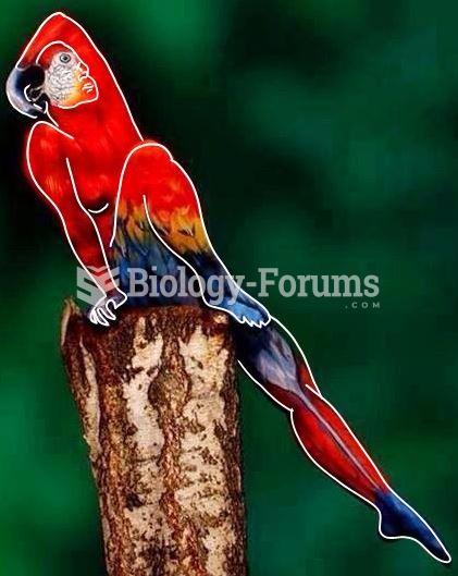 Parrot Human (Solution)