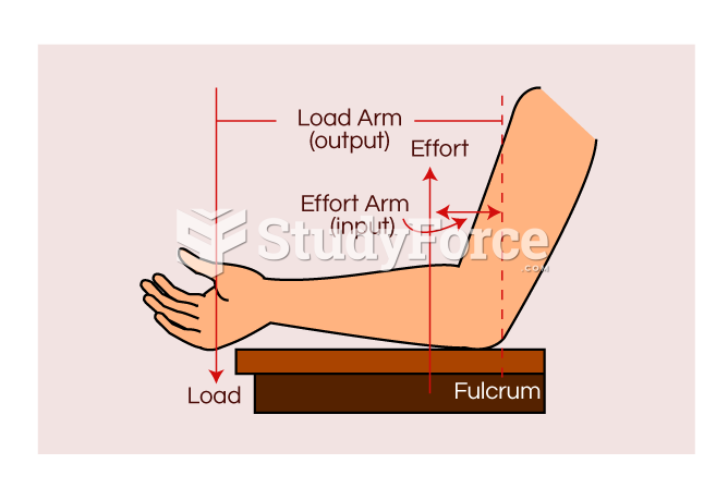Human arm lever