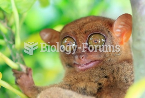 Bulging Eyes Of The Tarsier Provide Insight Into Evolution Of Human Vision