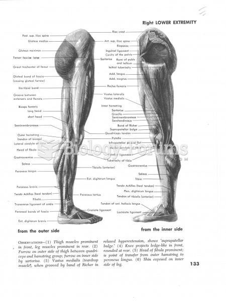 Muscles of the Right Lower Extremity