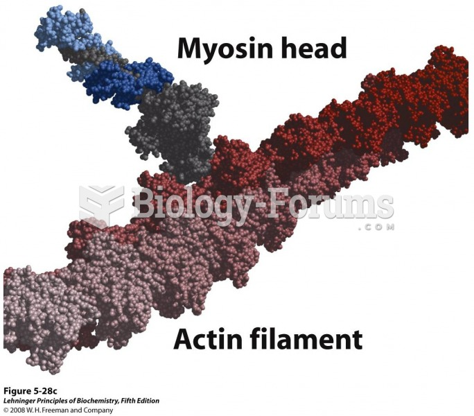 Space-filling model of an actin filament (shades of red) with one myosin head (gray and two shades o