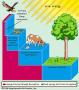 Environmental Energy Flow