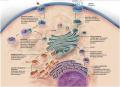 Endomembrane system