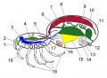 Spider main organs