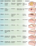 Types of skin lesions.