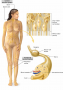 The nervous system is described as having two interconnected divisions: the central nervous system (