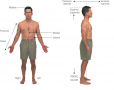 Anterior and lateral views of the body illustrating directional terms.