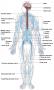 Parts of human nervous system