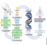 Pharmacogenomics, Genetic makeup, Drug development,  Individual response to drugs, Prescriptions