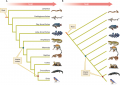 Two equivalent ways of drawing a phylogeny