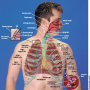 Structures of the respiratory tract.