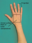 Parts of the Hand Used in Palpation; Dorsal Surface