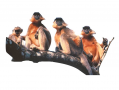 A group of capped langurs.