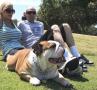A British Bulldog shares a day at the park.