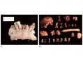 (a) The mandible from Sima de Elefante Atapuerca, Spain. (b) The Gran Dolina locality in Atapuerca,