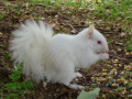 A true albino squirrel. Note the pink eyes.