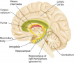 The Major Components of the Limbic System