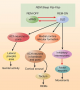 Control of Components of REM Sleep by the REM-ON Region