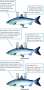 Water and salt regulation by isosmotic, hyperosmotic, and hypoosmotic aquatic organisms.