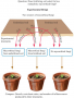 Testing the effects of long-term fertilizing on inter-actions between mycorrhizal fungi and plants o