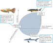Classification of life histories based on juvenile survival, fecundity, and age at reproductive matu