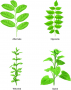 Plant architecture is due to reiterative, or repeat, patterning.