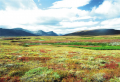 The tundra at the base of the Torngat mountains in Labrador consists primarily of low-growing mosses