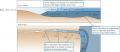 Structure of a salt wedge estuary.