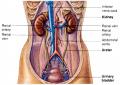 Human cavity