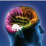 Reptilian Brain or Instinctive Brain Promote Understanding of Human Behavior