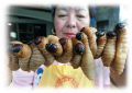 What some consider food, even delicacies, can turn the stomachs of others. These roasted grub worms ...