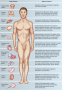Organ systems of the human body.