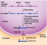 Post-transcriptional processing.