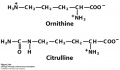 ) Ornithine and citrulline, which are not found in proteins